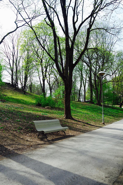 Valokuvassa tyhjä penkki keväisessä puistossa, jossa puiden lehdet alkavat vihertää.