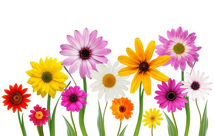 Kuvituskuvassa kukkia.